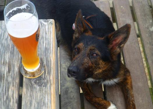 Large Beer